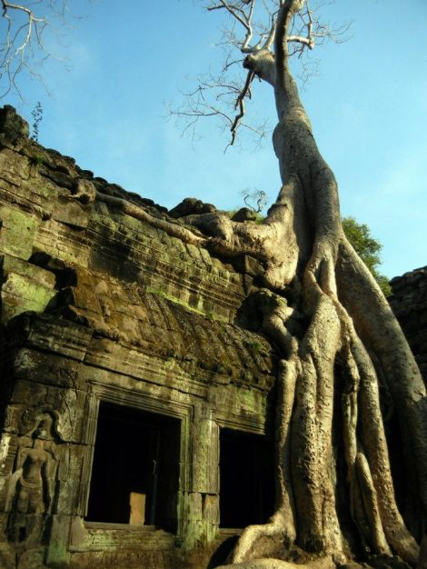 I no longer remember the real name of this temple in Siem Reap, only that they called it the Tomb Raider temple
