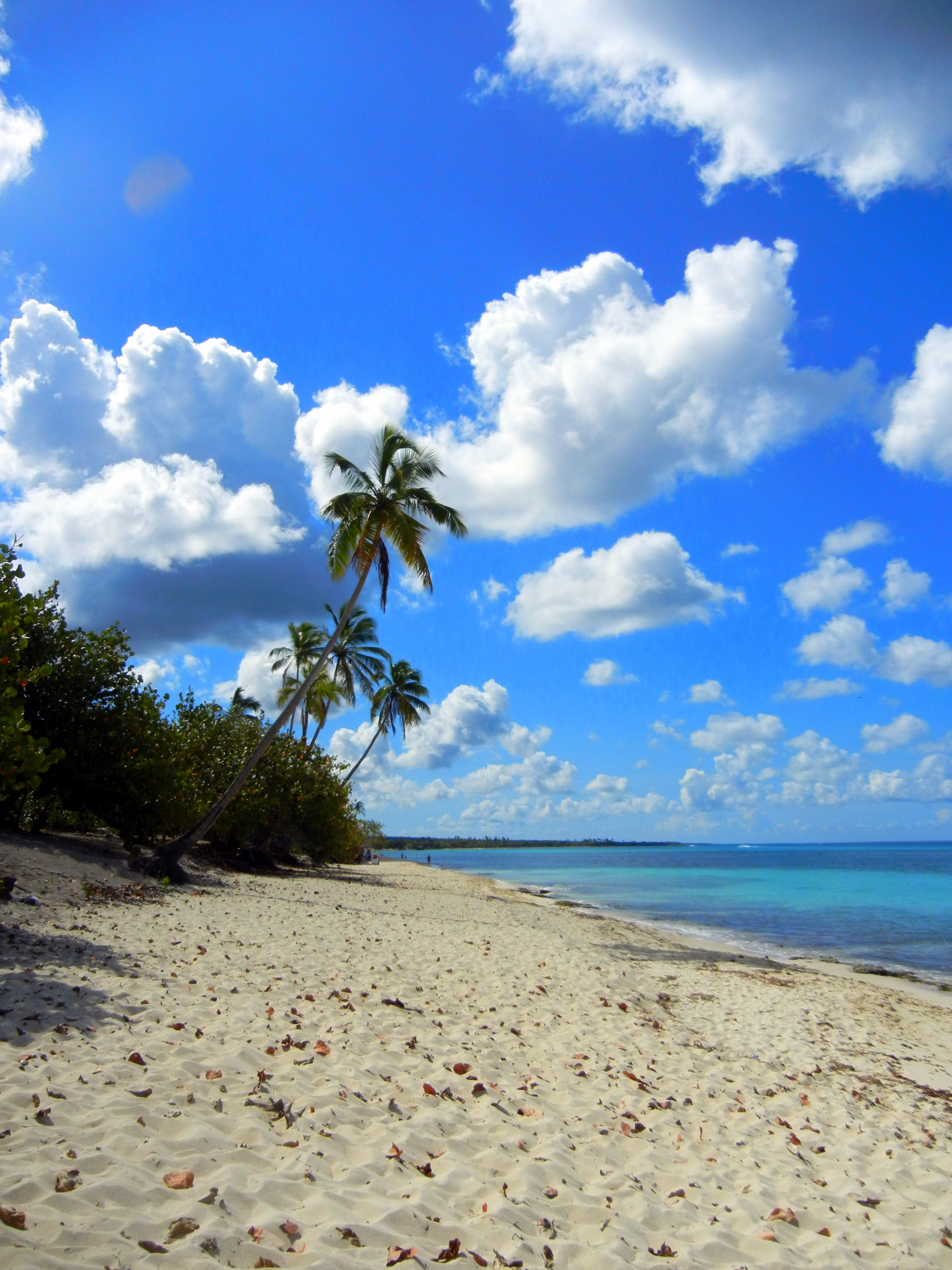 Tour To Isla Saona Dominican Republic Teaching Wanderlust