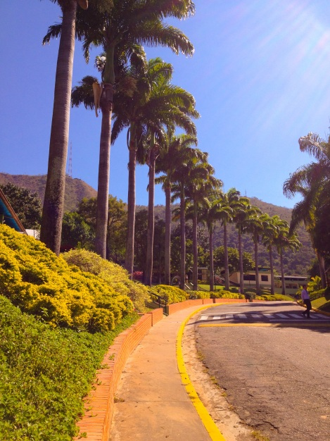 I took this pic of the lovely CIC Valencia campus a couple of months ago for VANAS and I can't wait to get back!