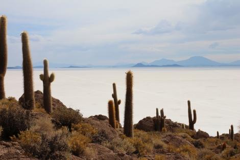 Cacti everywhere on Isla de Pescados
