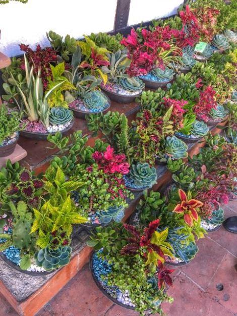 tovar plants