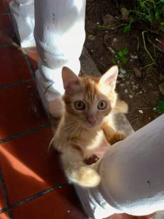 I loved this little kitten who greeted me at every meal